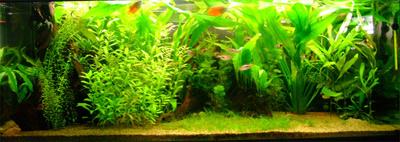Il mio primo acquario d 39 acqua dolce consigli for Comprare un acquario